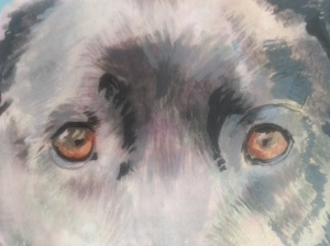rough of 'Sweetie' by Jess Hurley Scott pet portrait painter