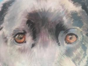 rough of 'Sweetie' by Jess Hurley Scott pet portrait painter