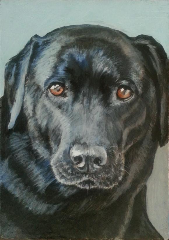 'Sweetie' acrylic on canvas pet portrait ©Jess Hurley Scott
