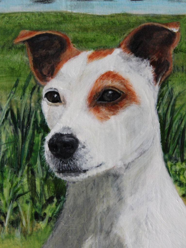 close up of pet portrait of max by Jess Hurley Scot
